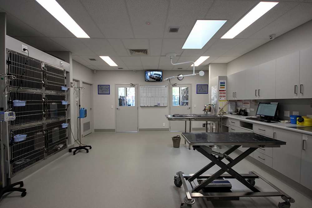 Clinic 6